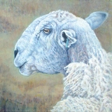 Bobs Blue Faced Leicester Tup